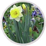 Dallas Daffodils 63 Round Beach Towel