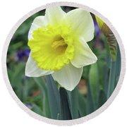Dallas Daffodils 64 Round Beach Towel