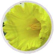 Dallas Daffodils 72 Round Beach Towel