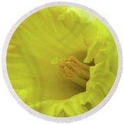 Dallas Daffodils 73 Round Beach Towel