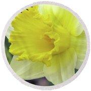 Dallas Daffodils 80 Round Beach Towel