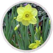 Dallas Daffodils 83 Round Beach Towel