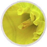 Dallas Daffodils 91 Round Beach Towel