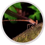 Damselfly 006 Round Beach Towel