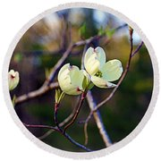 Dancing Dogwood Blooms Round Beach Towel