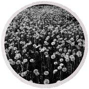 Dandelion Field In Black And White Round Beach Towel