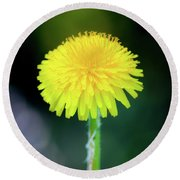 Dandelion Flower Round Beach Towel