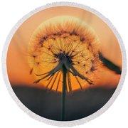 Dandelion In The Sun Round Beach Towel