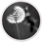 Dandelion Puff In Black And White Round Beach Towel