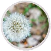 Dandelion Seed Head Round Beach Towel