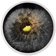 Dandelion Spotlight Round Beach Towel