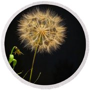 Dandelion Thirty Nine Round Beach Towel