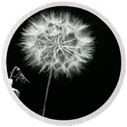 Dandelion Thirty Six Round Beach Towel