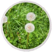 Dandelions In Connecticut Round Beach Towel
