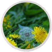 Dandelions, Young And Old Round Beach Towel