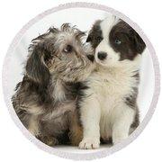 Dandy Dinmont Terrier And Border Collie Round Beach Towel