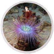 Dangerous Underwater Flower Round Beach Towel