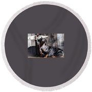 Dapple Dachshund Round Beach Towel