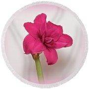 Dark Pink Amaryllis Round Beach Towel