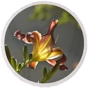 Dark Red Day Lily With Sun Shining Through I Round Beach Towel