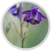 Dark Violet Columbine Flowers Round Beach Towel