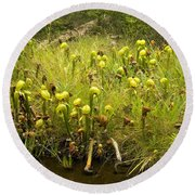 Darlingtonia Plants Grow Beside Round Beach Towel