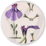 Darwins Orchis Pyramidalis, Illustration Round Beach Towel