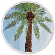 Date Palm In The City Round Beach Towel