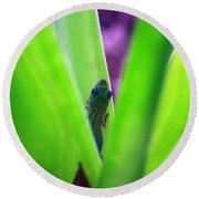 Day Gecko And Pineapple Plant Round Beach Towel