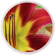Day Lily Macro Round Beach Towel
