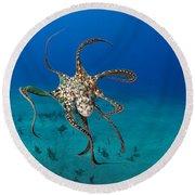 Day Octopus Round Beach Towel