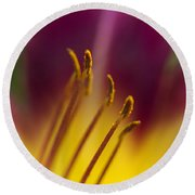 Daylily Abstract Round Beach Towel