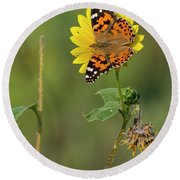 Ddp Djd Painted Lady On Sunflower 2690 Round Beach Towel