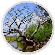 Dead Cedar Tree In Waccasassa Preserve Round Beach Towel