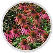 Deep Pink Echinacea Straw Flowers Green Leaf And Grass Background 2 9132017 Round Beach Towel