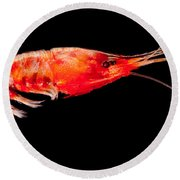 Deep Sea Shrimp Round Beach Towel