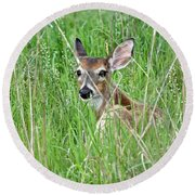 Deer Bedded Down During Mid Day Round Beach Towel