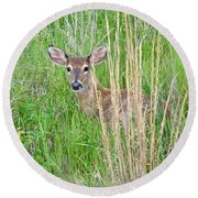 Deer Bedded Down In Grass Round Beach Towel