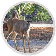 Deer Doe - 1 Round Beach Towel