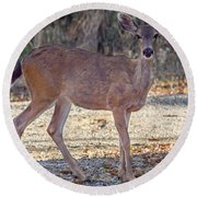 Deer Doe - 2 Round Beach Towel