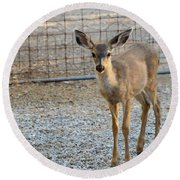 Deer Fawn - 1 Round Beach Towel