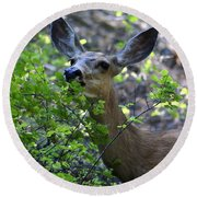 Deer Having Lunch Round Beach Towel
