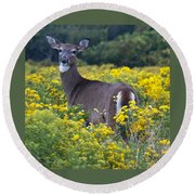 Deer In A Field Of Yellow Flowers Round Beach Towel