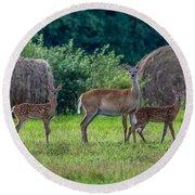 Deer In A Hay Field Round Beach Towel
