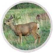 Deer In Boulder Colorado Round Beach Towel