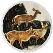 Deer In Forest Clearing Round Beach Towel