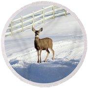 Deer In Snow Covered Road Round Beach Towel