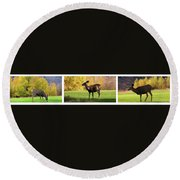 Deer In The Wild Round Beach Towel