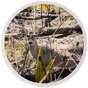 Deer In The Wood Round Beach Towel