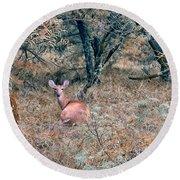 Deer In Woods Round Beach Towel